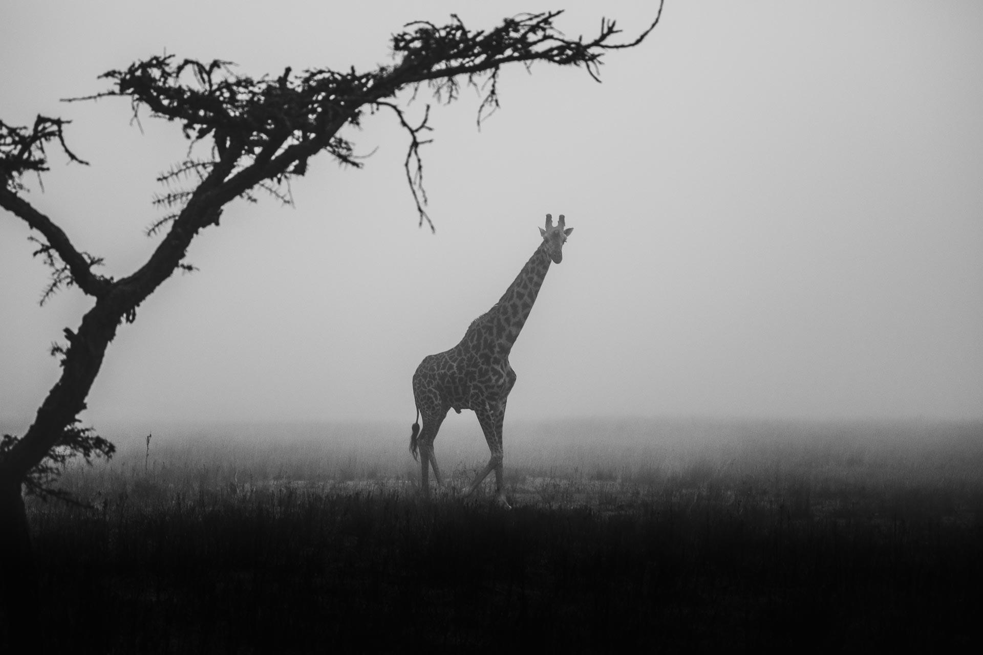 Misty Masai