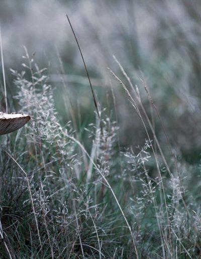 Fungi Wonderland